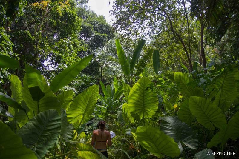 La jungle.
